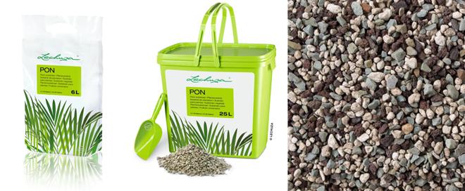 Как правильно поливать растение в грунте лечуза пон?