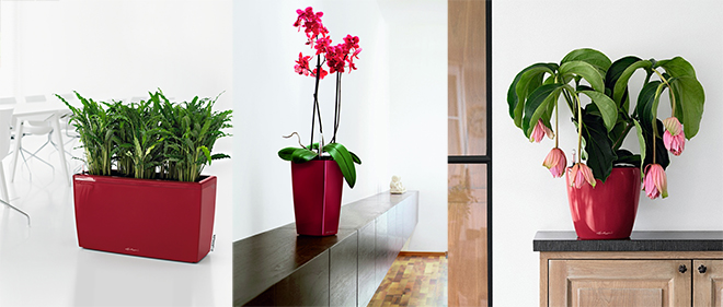 red-planters-05.jpg