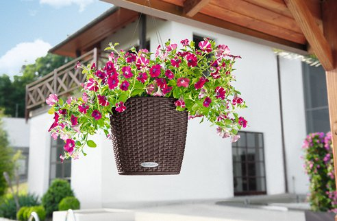 NIDO-Cottage-Self-watering-hanging-basket.png.492x0_q85_crop-smart.jpg
