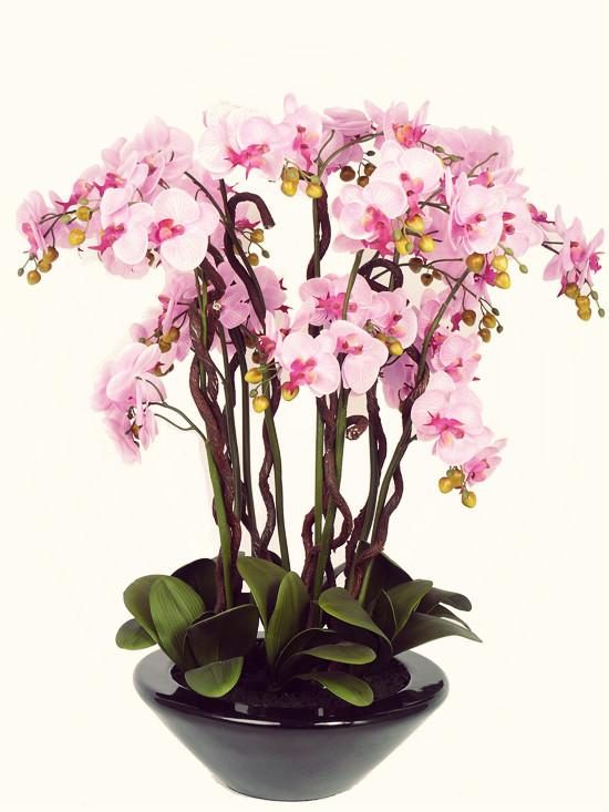 Как пересаживать цветущую орхидею в домашних условиях 547